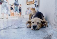Guía WUF: ¿Qué hacer si encuentras un perro abandonado en la calle?
