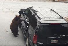 EEUU: oso abre la puerta de una camioneta y llenó de temor a los miembros de una familia