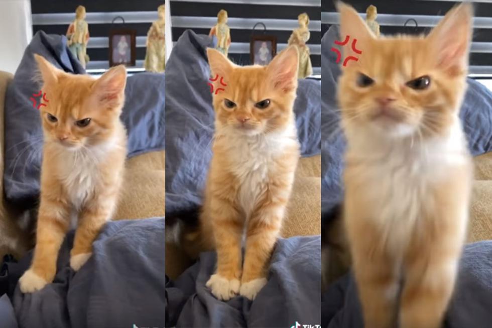 El gato malhumorado es sensación y furor en redes sociales. | Foto: @reneorock/Facebook/TikTok