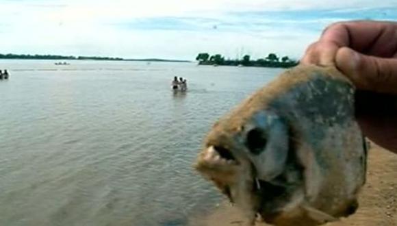 Argentina: Calor y lluvia provocan ataques de peces carnívoros