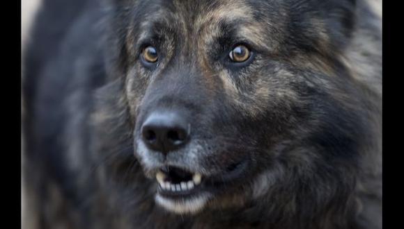 Croacia: Un juez prohíbe que perro ladre por la noche
