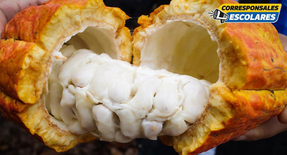 En la Reserva Nacional de Tambopata se encuentra la Cooperativa Agrobosque, que apuesta por mejorar la calidad de vida de los probadores a través de la producción del cacao.
