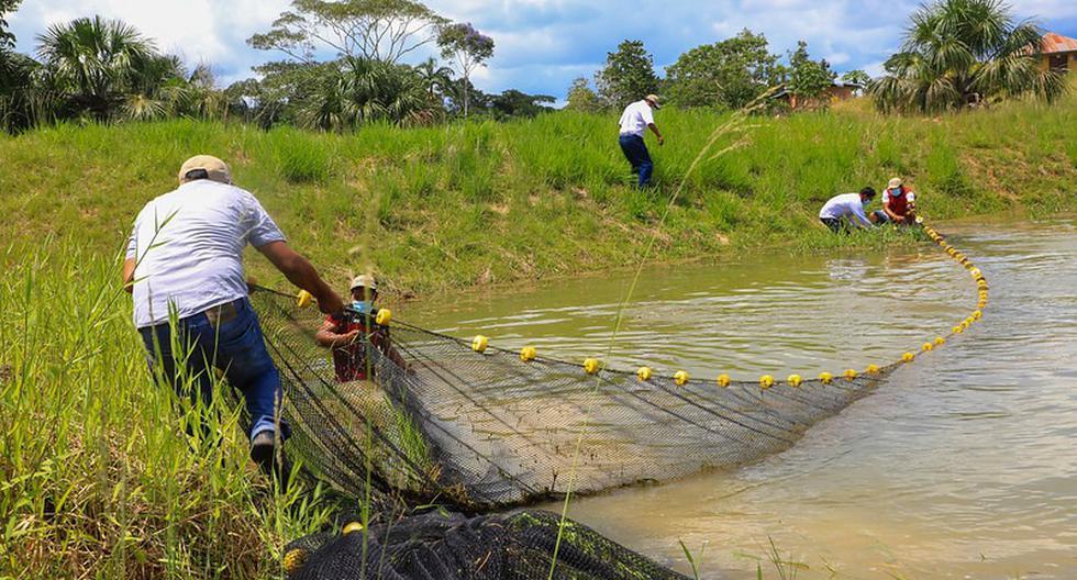 El avance de la acuicultura está yendo a paso de tortuga, dijo Icochea. (Foto: Produce)