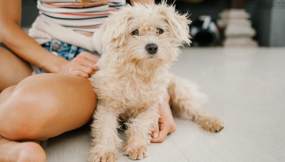 El 23 de marzo se celebra el Día Nacional del Cachorro. (Foto: Pexels)