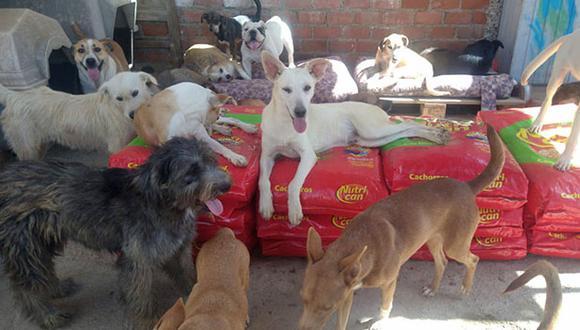 Las empresas Molitalia, Purina, Kuntur  Comercial y Savar Express donaron comida para perros y traslado a los albergues afiliados a WUF. (Cortesía)