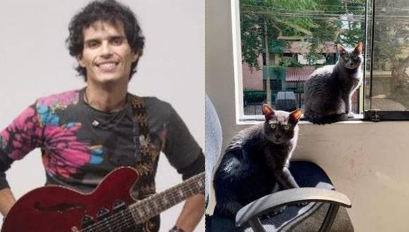 Pedro Suárez Vértiz dedica mensaje a sus gatos y dice que son la mascota perfecta en tiempo de cuarentena  (Foto: Instagram)