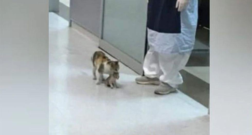 La mamá gata sorprendió a varios médicos pues ingresó al hospital y pidió ayuda para su cría.  Foto: @Jamushi7/Facebook