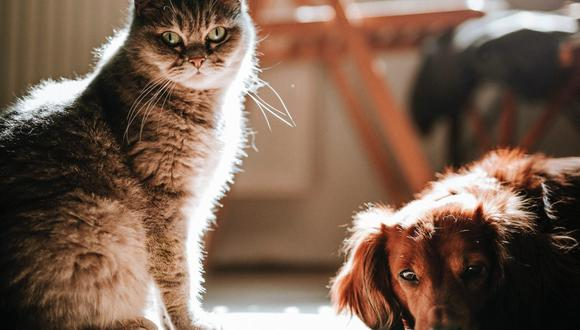 Los perros y gatos con diabetes necesitan mucho más control veterinario. (Foto: Marián Šicko / Pexels)