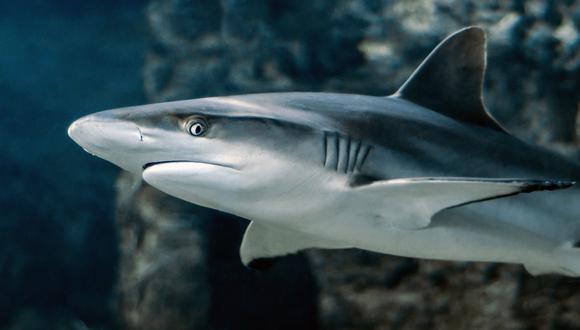 El tenso enfrentamiento entre un tiburón y un hombre durante 10 largos minutos asombra a la red. (Foto referencial: Pixabay)