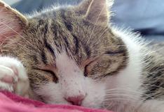 El insólito comportamiento que tiene una gata cuando duerme plácidamente