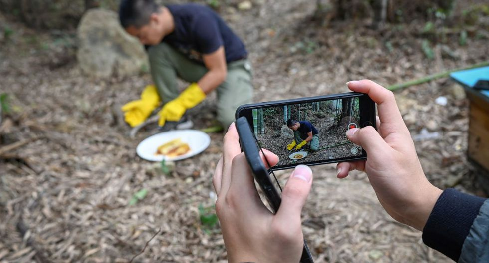 Graban un video a Ma Gongzuo mientras prueba la miel en su colmenar en el condado de Songyang en la provincia china de Zhejiang (Foto: AFP)