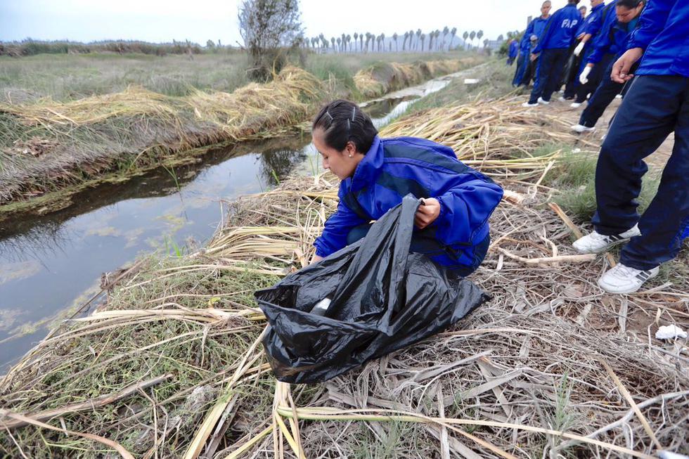 Estudiantes de diversas instituciones participaron en jornada de limpieza de los Pantanos de Villa, por el Día del Medio Ambiente. (Fotos: Difusión)