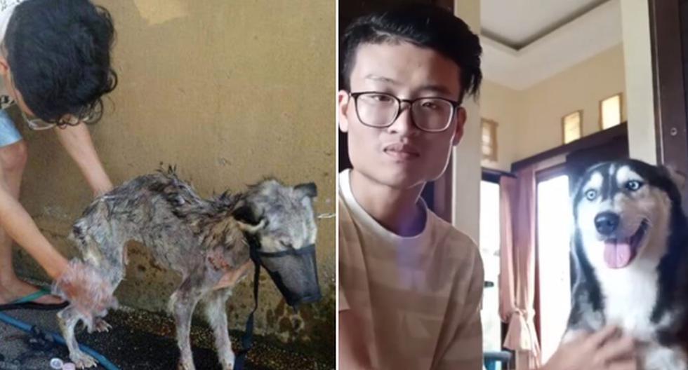 Foto 1 de 3 | El joven de esta historia decidió ayudar al perro callejero, dándole los cuidados que necesitaba. | Foto: ricoocir / Instagram. (Desliza hacia la izquierda para ver más fotos)