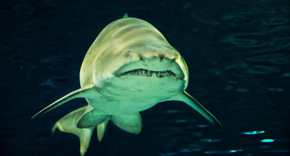 Se hizo viral en Facebook el instante en que un tiburón le sonríe a un grupo de turistas. (Foto: Referencial/Pixabay)