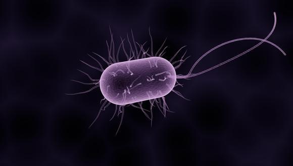Representación de una bacteria salmonella. (Ilustración: Pixabay)