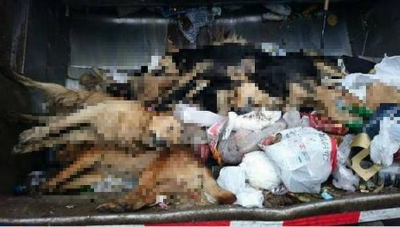 Una docena de perros fueron envenenados en Punta Hermosa