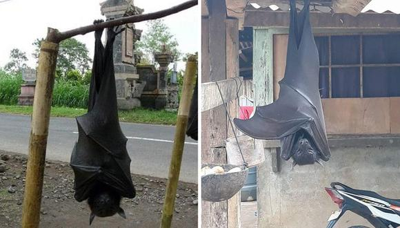 """Se viralizó la foto de 'Diadema' el murciélago gigante de """"tamaño humano"""" de Filipinas"""