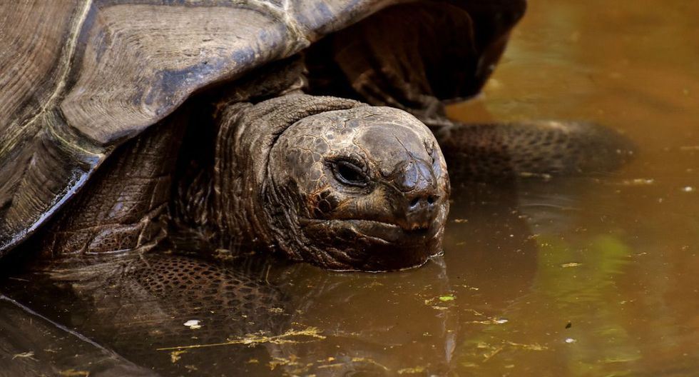 Lark conducía en la carretera junto a su hermano, Kevin Grant, el 12 de mayo cuando vio lo que creía que era un ladrillo en el aire pero era una tortuga. (Foto: Pixabay)