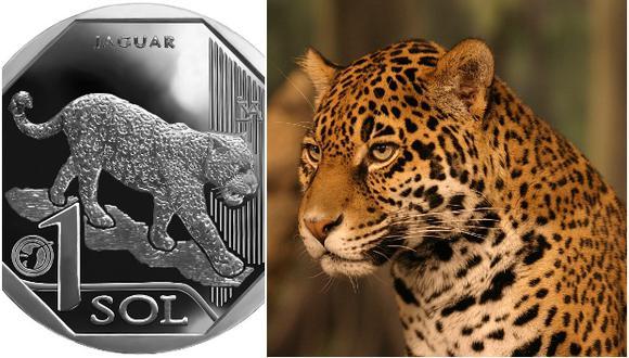 En el ámbito cultural, el jaguar ha sido de importancia para culturas precolombinas costeras como Chavín, quienes lo consideraban objeto de culto, junto con la serpiente y el cocodrilo.