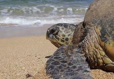 ¿Por qué los huevos de tortuga de Panamá son un riesgo para el consumo humano?