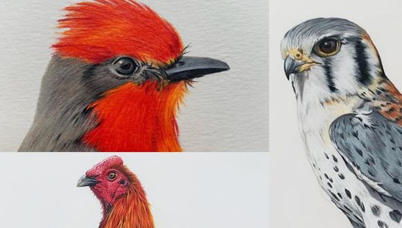 Algunas ilustraciones de  María Lucía Nuñez Malachowski.
