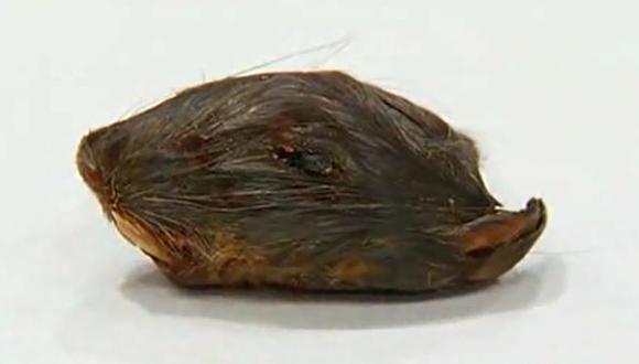 Hombre dice que halló cabeza de rata en su sopa en restaurante