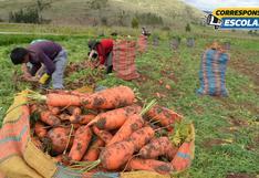 La importancia de implementar la agricultura sostenible en nuestro país
