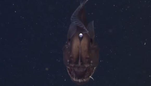 Graban por primera vez al temible pez diablo negro del mar