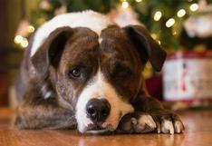 WUF: ¡Auxilio! Mi perro se orina en el árbol de Navidad