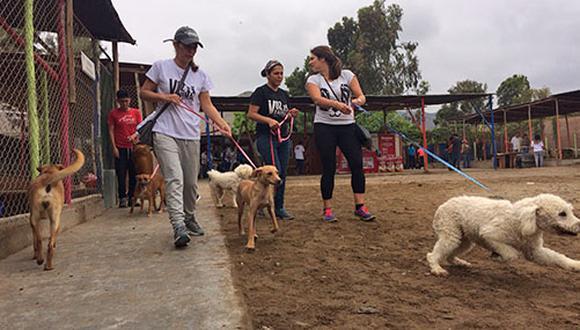 Los paseos son una parte crucial de la rehabilitación de un perro de albergue pues no solo los relaja al ejercitarlos, sino que además les da la oportunidad de socializar.