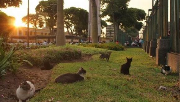 Parque Universitario: más de 100 gatos fueron abandonados