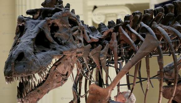 Los megaraptóridos tenían cráneos largos y bajos que estaban llenos de dientes pequeños pero afilados y serrados. (Foto: Reuters)