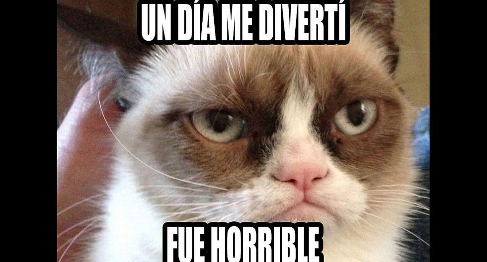 Grumpy Cat se convirtió en toda una celebridad de Internet e inspiró miles de memes.