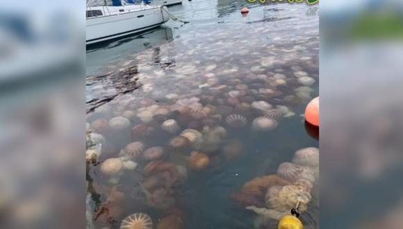 Cientos de medusas aparecen en playa de La Punta. (Foto: Chacla al Día / Facebook)