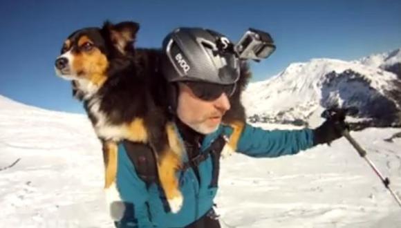 Perro que ama esquiar con su dueño es famoso en Facebook