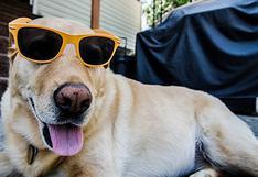 Cuando calienta el sol y tienes mascotas