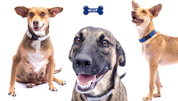 Chata, Monalisa y Anita serán las invitadas especiales de WUF a esta feria de mascotas Dogmingos.