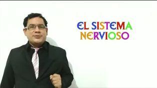 Dos minutos para aprender: El sistema nervioso
