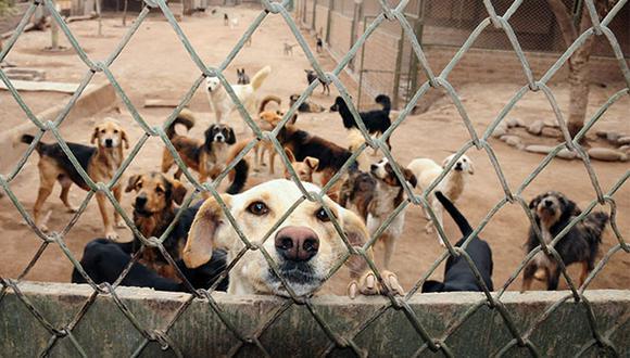 Vida Digna es uno de los albergues afiliados a WUF y actualmente tiene cerca de 70 perros, de los cuales la mayoría están en adopción. (Foto: Andrea Carrión)