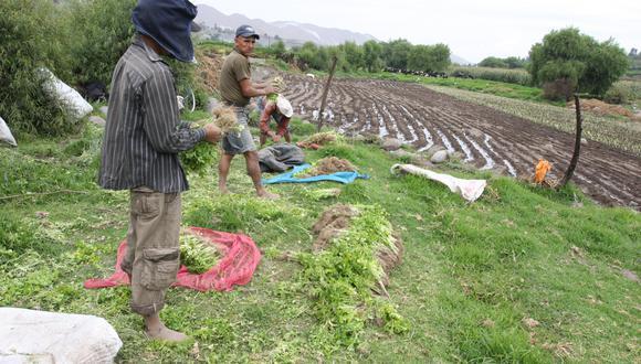 En los sectores primarios (es decir, agro, pesca y minería), el 83,9% del empleo es informal, según el INEI. (Foto: GEC)