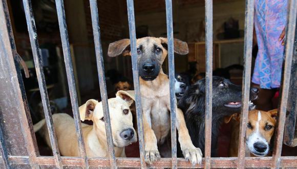 Gracias a los albergues de animales abandonados, estas mascotas abandonaron las calles, se han curado de sus enfermedades y ahora lucen así (Foto: Hugo Curotto)