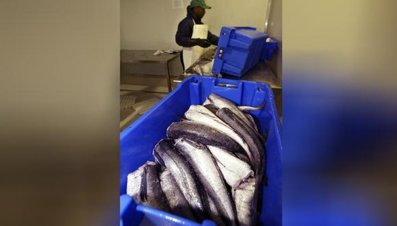 La exportación de productos en base a merluza alcanzó US$27 millones en 2018. (Foto: AFP)