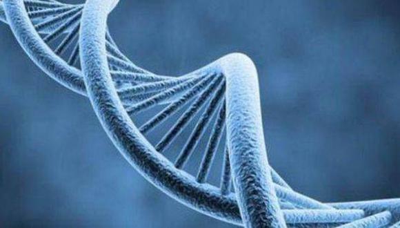 Descubren cuántos y qué genes se activan en cada órgano humano