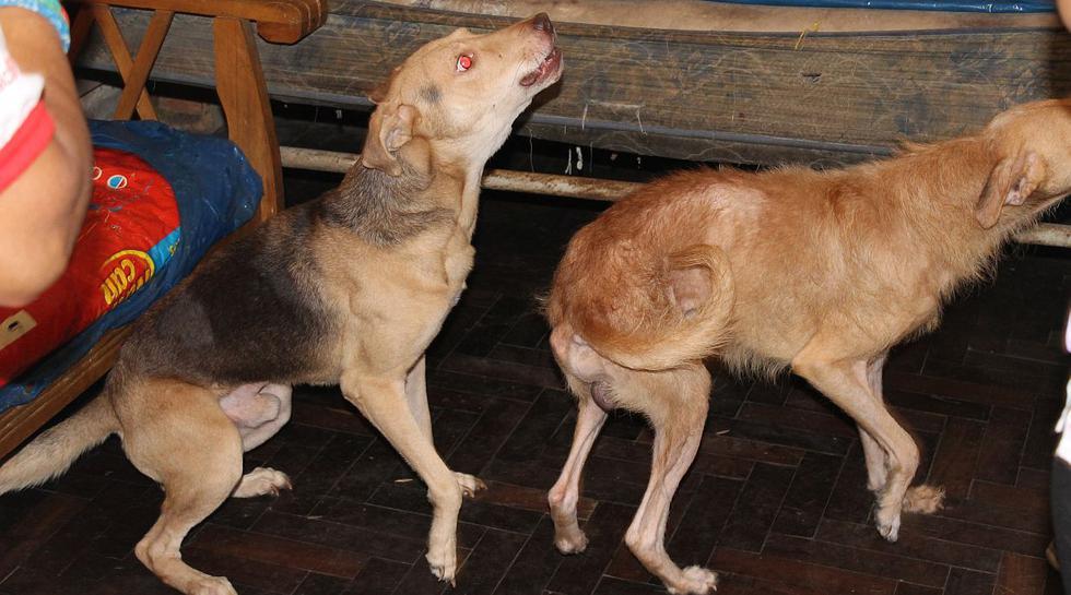 Unos 18 perros fueron rescatados de casa en Barranco [FOTOS] - 5