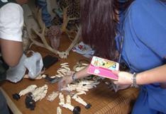 Bolivia: investigación revela que tres grupos criminales internacionales controlan el tráfico de jaguares