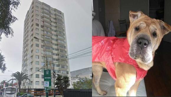 Un edificio en Magdalena prohibía la tenencia de mascotas y el uso de ascensores para animales. El caso llegó hasta el Tribunal Constitucional.