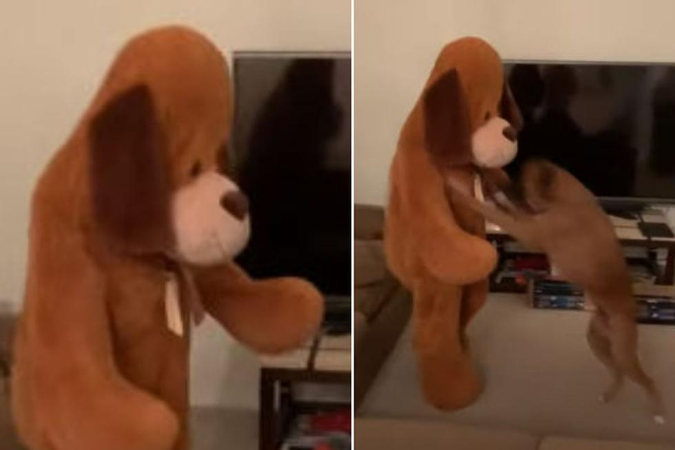 El can tuvo un insólito comportamiento que dio la vuelta al mundo. (YouTube: ViralHog)