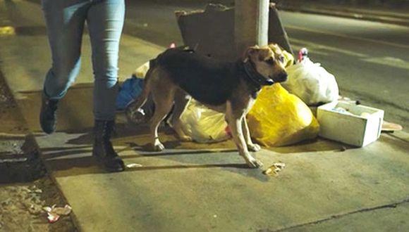 Miles de perros son abandonados por sus propios dueños y suelen hacerlo cerca a un basural.