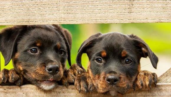 Una pareja de empresarios ofrece un jugoso sueldo de 40 mil dólares al año para una persona que se encargue de cuidar a sus perros | Foto: Pixabay / kim_hester / Referencial