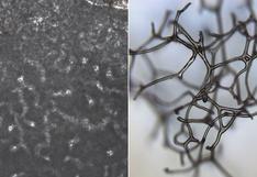 Científicos descubren el que pudo ser el animal más antiguo de la Tierra: tiene 890 millones de años